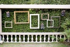 Marcos en blanco de la foto contra la pequeña pared verde del árbol y la cerca blanca Imagenes de archivo