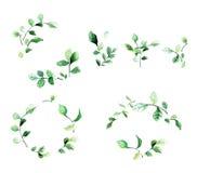 Marcos florales decorativos elegantes con las hojas y las ramas verdes en estilo de la acuarela Perfeccione los elementos del dis