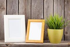 Marcos y planta en blanco de la foto Imagen de archivo