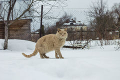Marcowe kot szuje na ktoś inny ogród Zdjęcie Royalty Free