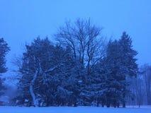 Marcowy śnieżyca Zdjęcie Stock