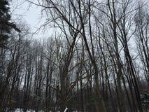 Marcowy śnieg Obrazy Royalty Free