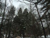 Marcowy śnieg Fotografia Royalty Free