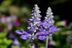 Marcro der Blume Lizenzfreie Stockfotos