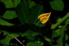 Marcro der Blume Stockbild