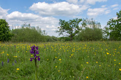 Marden Meadow Royalty Free Stock Images