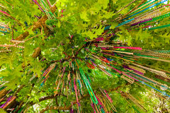 Mardi Gras beads. Popular Mardi Gras beads hanging from a tree in New Orleans, Louisiana