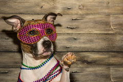 Mardi Gras Dog. A cute dog dressed up for Mardi Gras