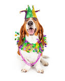 Mardi Gras Party Dog. Funny photo of a happy and smiling Basset Hound dog wearing a jester hat, neck garland and bead necklace