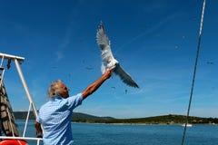 Mare adriatico, Crroatia, capitano e un gabbiano Immagini Stock Libere da Diritti
