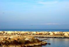 Mare adriatico e una spiaggia rocciosa con molti gabbiani fotografia stock libera da diritti