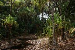 Mare Aux Cochons Trail Imagen de archivo libre de regalías