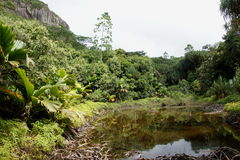 Mare Aux Cochons Trail. Mare Aux Cochons. Mahe Island. Morne Seychellois National Park. As the only wetland area on the largest Seychellois Island and one of stock photography