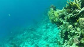 mare, barriera corallina video d archivio