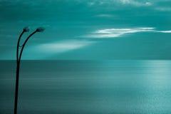 Mare Calo-Nero Fotografie Stock Libere da Diritti