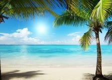 Mare caraibico e palme Immagini Stock