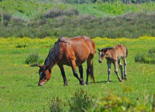 Mare and colt. On the green background Royalty Free Stock Photos