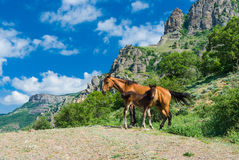 Mare and colt on a spring pasture in mountains Stock Photo