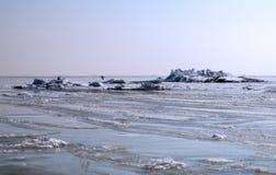 Mare congelato Fotografie Stock
