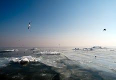 Mare congelato Immagini Stock