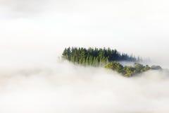 Mare degli alberi circostanti della nebbia Fotografia Stock Libera da Diritti