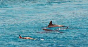 Mare dei delfini in rosso Fotografia Stock Libera da Diritti