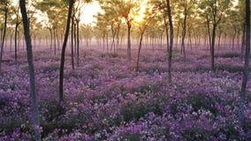 Mare dei fiori Fotografie Stock