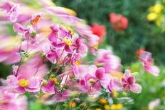Mare dei fiori mobili dal vento fotografia stock