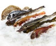 Mare dei pesci Immagini Stock Libere da Diritti