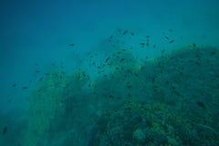 Mare dei pesci e delle barriere coralline in rosso Fotografie Stock Libere da Diritti