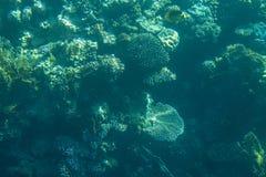 Mare dei pesci e delle barriere coralline in rosso Immagini Stock Libere da Diritti