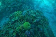 Mare dei pesci e delle barriere coralline in rosso Fotografia Stock