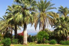 Mare del Galilee, Israele Fotografie Stock