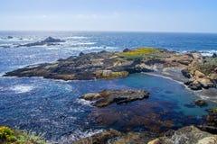 Mare del leone su roccia, monterey fotografie stock