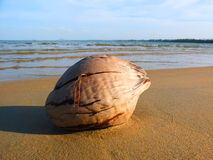 Mare del malese della noce di cocco Immagini Stock Libere da Diritti