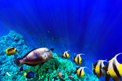 Mare del pesce e del corallo in rosso. L'Egitto, Africa. Fotografia Stock Libera da Diritti