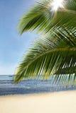 Mare del sole della palma Fotografie Stock