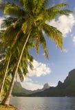 Mare del sud di moorea degli alberi di noce di cocco Fotografia Stock Libera da Diritti