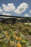 Mare dell'ananas Immagini Stock Libere da Diritti