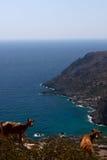 Mare della baia, capra, Lissos, Creta Grecia Fotografie Stock Libere da Diritti