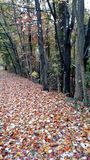 Mare di Autumn Leaves Fotografia Stock Libera da Diritti