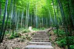 Mare di bambù in montagna nanshan Immagine Stock