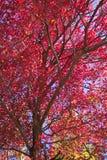 Mare di colore rosso fotografie stock