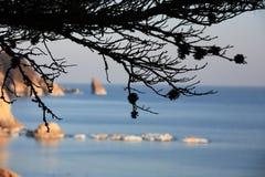 Mare di Giappone. Isola 11 fotografia stock libera da diritti