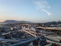 Mare di legno della spiaggia Immagine Stock Libera da Diritti