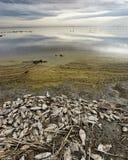 Mare di Salton Fotografia Stock