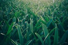 Mare di verde fotografie stock