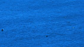 Mare e delfini archivi video