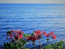 Mare e fiori Fotografie Stock Libere da Diritti