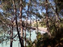 Mare e foresta Fotografie Stock